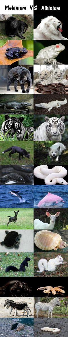 Animals that are different than normal @marymavil