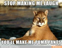 Check out more at Those Funny Animals - http://www.funny-animal-pictures.org/check-out-more-at-those-funny-animals-118/