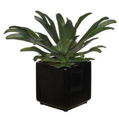 House of Silk Flowers Artificial Staghorn Succulent Desktop Plant in Planter & Reviews | Wayfair