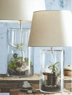 I finally know what to put in my lamp...a terrarium!
