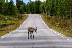 Project of Grövelsjön Country Roads