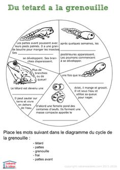 Printable cycle grenouille #grenouille