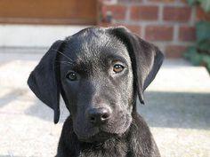 Labradorsaresimplythebest.com