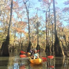 Cypress-Tupelo Swamp Kayak Tour - Picture of Gravity Trails Guided Tours of New Orleans New Orleans Swamp Tour, Pearl River, Kayak Tours, Trail Guide, Tour Guide, Vacation Spots, Kayaking, Wildlife, Explore