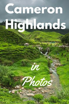 A photo essay of my Cameron Highlands tour highlights | Tracie Travels >>> Explore my travel photos from the beautiful Cameron Highlands in Malaysia!