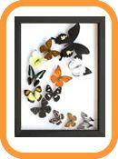 List of Georgia Butterflies http://www.thebutterflysite.com/georgia-butterflies.shtml