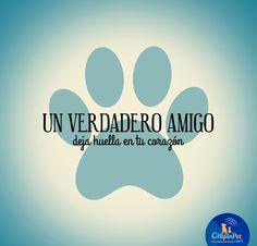 UN VERDADERO AMIGO... Animals And Pets, Baby Animals, Funny Animals, Cute Animals, I Love Dogs, Puppy Love, Pet Hotel, Amor Animal, Little Bit