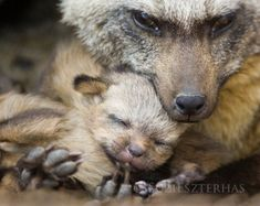 Mother and Baby Animals MOM and BABY BEAR by BabyAnimalPrints