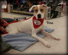 Adopt A Pet Tuesday: Trina, O'Malley & Corrine - Northern Michigan's News Leader