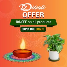 MEGA DIWALI SALE!! Use Coupon Code: DIWALI10 for 10% OFF on all products.  Celebrate this festive season with a wide variety of Plants and Potters, and gifting idea from Paudhewala.  Shop with confidence! Sit back and enjoy shopping while we deliver your purchase right at your doorstep. Call us at +91-8800033309 or Visit us at www.paudhewala.com  #Paudhewala #OnlineNursery #OnlinePlants #OnlinePots #Pebbles #SpecialOffer Online Nursery, Diwali Sale, Big Plants, Plant Nursery, Garden Accessories, Nurseries, Festive, Confidence, Seeds