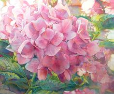 watercolor hydrangea, Jeannie Vodden = I simply LOVE LOVE LOVE these flowers, no matter what color they are, pink, white, blue or any variation in between!