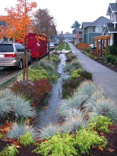 rain gardens - Pesquisa Google