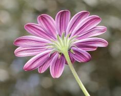 Flower fun by @Doug Wheller, via Flickr