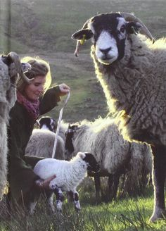 Amanda_Owen #yorkshireshepherdess