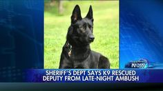UPDATE: Police K9 Doing OK After Saving Cop From Brutal Ambush (05/28/2015 - Fox News Insider)  Canine Lucas suffered a torn ligament, some broken teeth and road rash, police are happy to report though he is still recovering ...he is expected to be fine!! What a gorgeous dog....and kicked the 3 POS' butts too!!!  I want one (not sure how my Siamese will feel about it) Lucas, you saved daddy's life - they were going to slit his throat with a box cutter... if you were my dog, you would be…