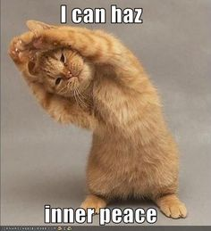 For my yoga friends who love kitties.