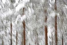 An artistic interpretation of a winter