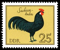 DDR, Deutsche Demokratische Republik (East Germany) Postage Stamp with Rooster