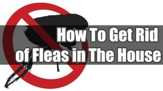 https://www.youtube.com/watch?v=xhGYDm91Vc0   How To Get Rid of Fleas.