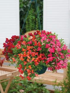 Candy Showers Trailing Snapdragon 10 Samen - All For Herbs And Plants