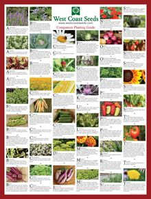 Companion planting chart poster for organic gardening (plant basil near asparagus to deter asparagus beetles)