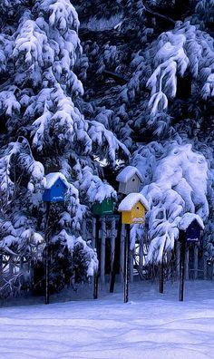 Snow on the birdhouses gifs gif nature trees snow pretty winter Gif Noel, Winter Szenen, Winter White, Winter's Tale, Snowy Day, Snow Scenes, Winter Beauty, Winter Pictures, Winter Landscape