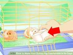 Image titled Make Your Guinea Pig Comfortable in Its Cage Step 13