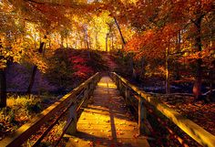 Find images and videos about nature, autumn and fall on We Heart It - the app to get lost in what you love. Foto Nature, All Nature, Beautiful World, Beautiful Places, Belle Photo, Pretty Pictures, Beautiful Landscapes, Mother Nature, Paths