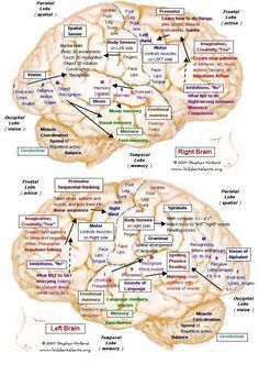 Living with a Thief named Lewy Body Dementia: Visual Learning about Lewy Body De. Brain Anatomy, Human Anatomy And Physiology, Medical Anatomy, Mapeamento Cerebral, Corps De Lewy, Alzheimer's And Dementia, Dementia Awareness, Disability Awareness, Dementia Care