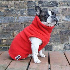 Boys Turtleneck - Red - French Bulldog Pug Fleece Sweater – Babies & Beasts