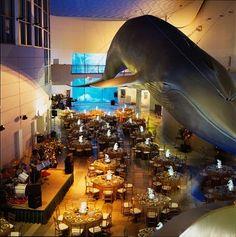 aquarium of the pacific oh my word reception in the ga aquarium that