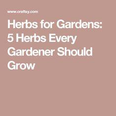 Herbs for Gardens: 5 Herbs Every Gardener Should Grow
