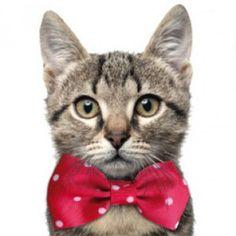 Wouapy collar con pajarita para gatos - Kiwoko - Tienda de Mascotas Kiwoko
