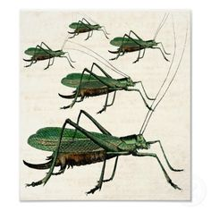 Grasshoppers / Katydids on the Move - Unique Vintage Poster