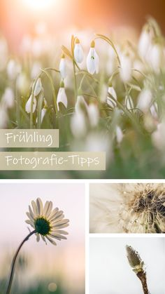 Blumen, Tau, Blüten, Schmetterlinge,...der Frühling bietet nach einem langen Winter zahlreiche farbenfrohe Fotomotive. Wir haben einige Tipps & Tricks für Sie zusammengetragen, wie Sie den Frühling gekonnt in Szene setzen und einzigartige Fotos erzielen. #frühling #fotografie #tipps #fotografietipps