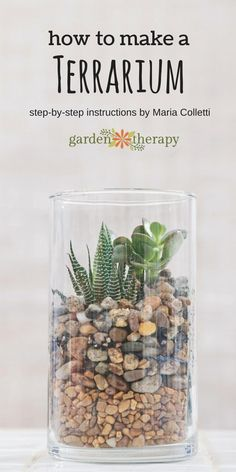 How to make a terrarium. Once you have this basic design down, it gives the you the opportunity to interpret a terrarium garden many times over and to with your own vision. The colors of the stones can be changed, the succulents used are easy enough to b Mini Terrarium, How To Make Terrariums, Terrarium Plants, Terrarium Wedding, Succulent Terrarium Diy, Indoor Succulent Garden, Succulent Landscaping, Succulent Gifts, Landscaping Design