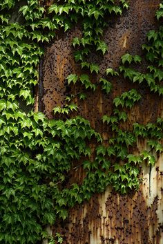 Ivy colored walls