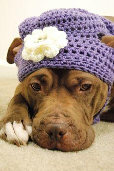 Dog Hat Lavender with White Flower Crochet for Large Breeds. $28.00, via Etsy.