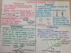 Evidence for Evolution Foldable Notes and Interactive Notebook ...