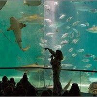 Aquarium of the americas new orleans