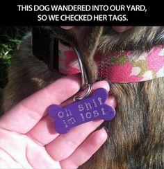 Funny dog tags.