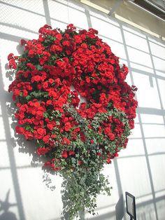 Living Begonia Wreath this is beautiful. Wreaths And Garlands, Door Wreaths, Beautiful Gardens, Beautiful Flowers, Arte Floral, Summer Wreath, Garden Inspiration, Christmas Inspiration, Topiary