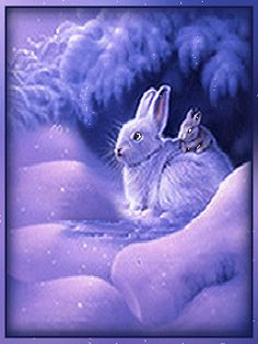 Christmas - Glitter Animations - Snow Animations - Animated images - Page 10 Gif Pictures, Animal Pictures, Rabbit Pictures, Gifs, Gif Animé, Animated Gif, Gif Fete, Animals And Pets, Cute Animals