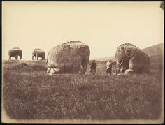 Two Men by Monumental Elephant Statues, China. 1860s