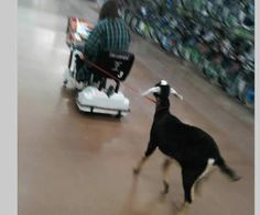 I need to go to WalMart... where's my goat?? LOL!