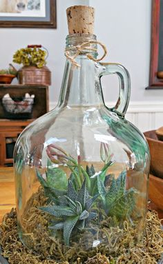 terrarium cloche jug, made from an old glass bottle!