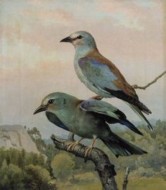 Ferdinand von Wright National Gallery, Flora And Fauna, Ferdinand, Science And Nature, Pet Birds, Drawings, Prints, Pictures, Painting