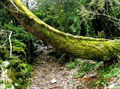 CAPRICHOS NATURALES Descansando megustaelmedionatural