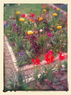 Florile mele!. - Ioan Grigoras - Google+