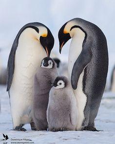 Empire of Penguins , meet the royals